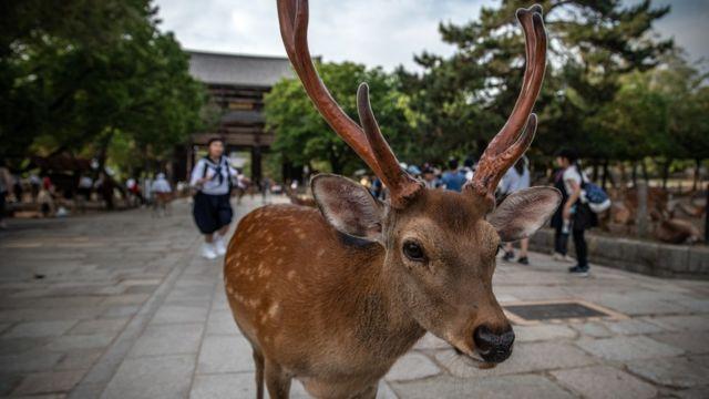 奈良のシカを死なせ逮捕された20代男の顔画像や名前(実名)は誰か特定された?